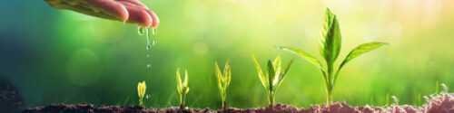 Develop a Lead Nurturing Campaign in 5 Steps